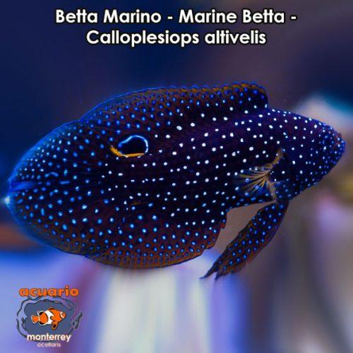 Meros acuario monterrey acuariomty venta de peces for Accesorios para acuarios marinos