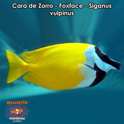 モルディブの魚図鑑2  asahinetorjp