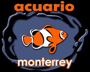 Acuario monterrey acuario monterrey acuariomty venta for Accesorios para acuarios marinos